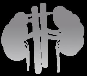 IAUN Kidney Image